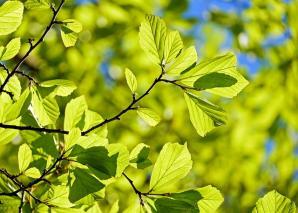 Persian oak wood 3064187 640